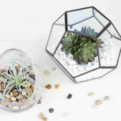 Simple No Fuss Terrarium