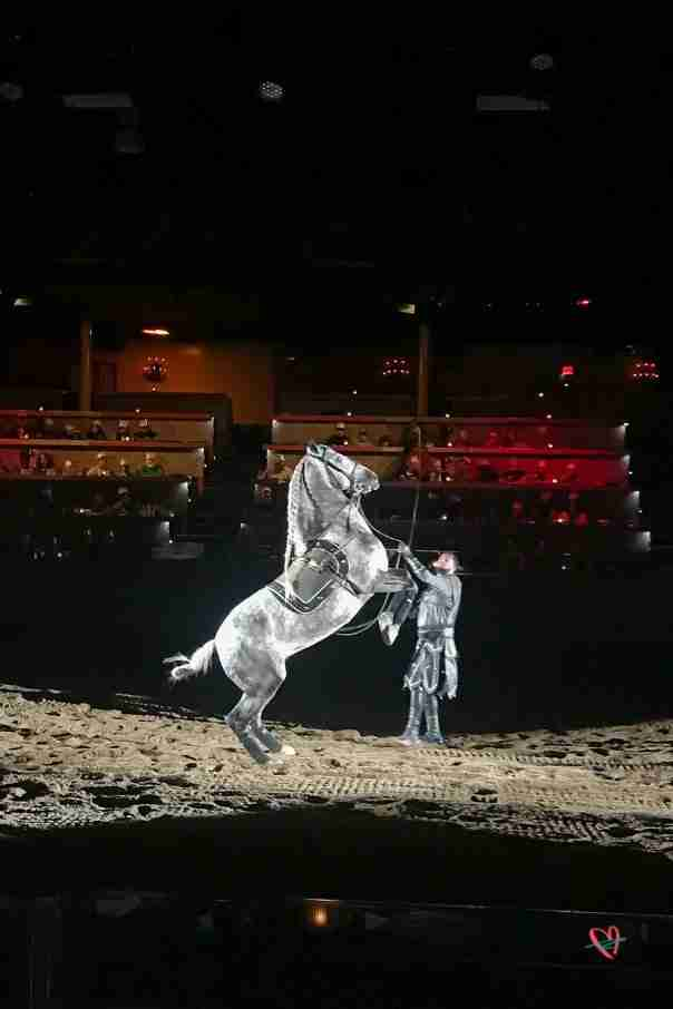 white horse on hind legs at Medieval Times