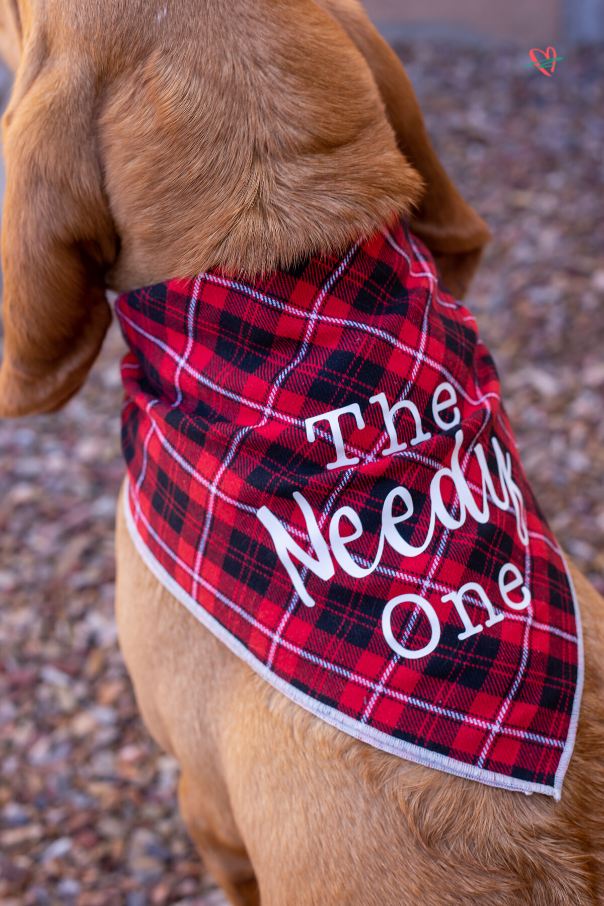Create the perfect personalized dog gift - dog bandanas! These personalized bandanas are as unique as the dogs that inspired them. Make one (or all) today! #cricutcreated #doggift #dogbandana